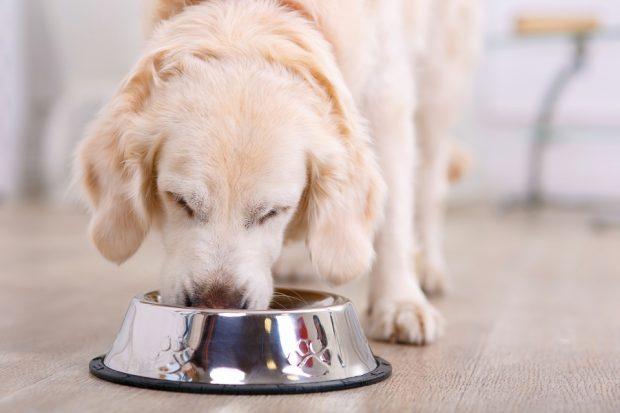 Etapes pour préparer vos croquettes pour chien
